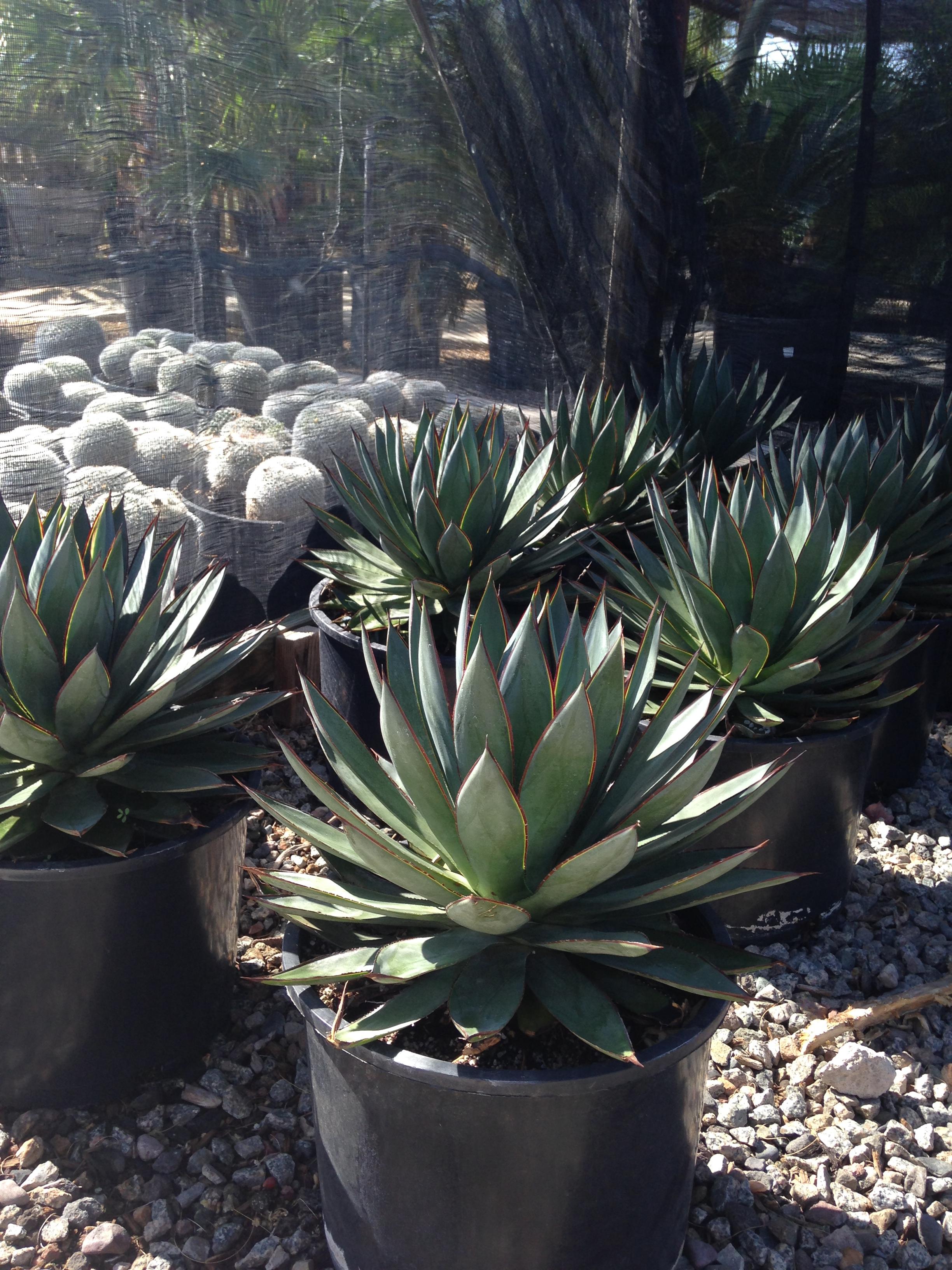 Xeriscape Plants | Earthtones Landscape