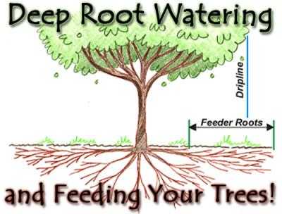 deep watering